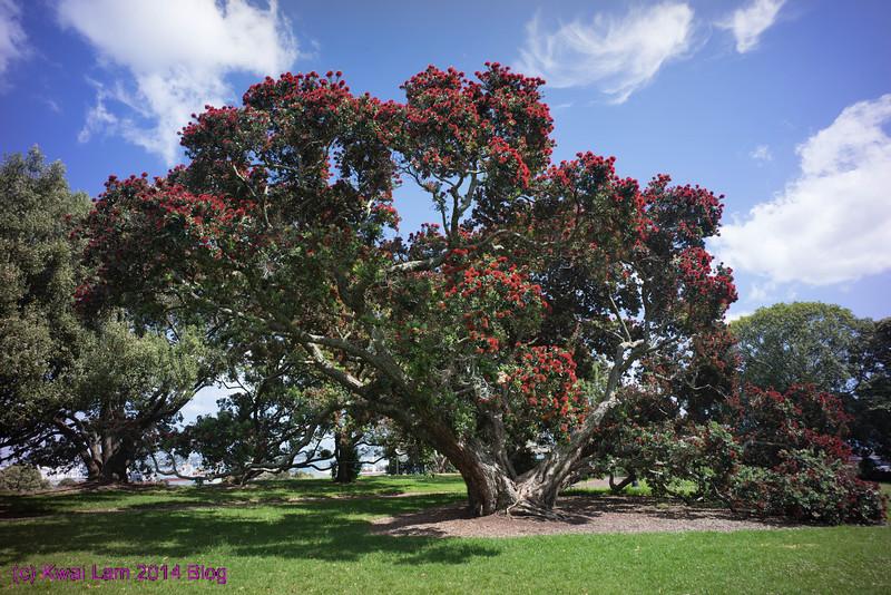 NZ2014_KwaiLam-07666