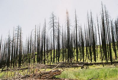 "7/4/05 Cty Rd. 258 to Blue Lake (burn area from 2001 ""Blue Fire""), Lassen Cty, CA"