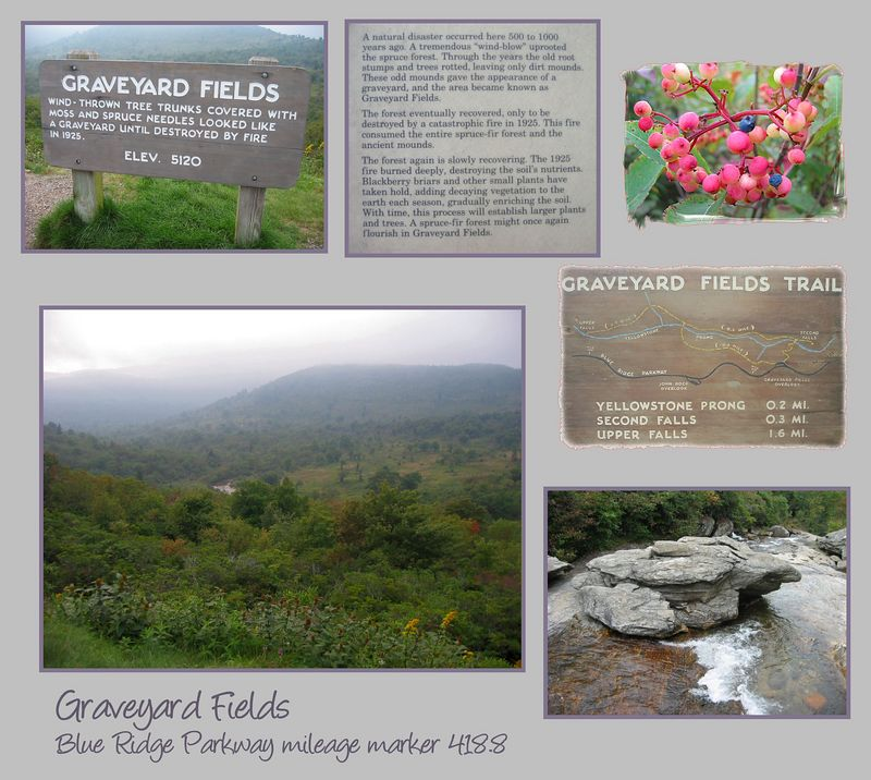 Graveyard Fields (elev 5120 mileage marker 418 8), Sep2004 [6 pictures incl signs and blueberries]