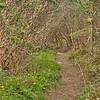 Craggy Gardens Trail