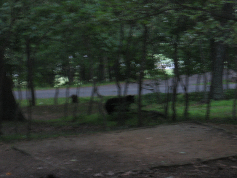"""My total for Sunday was 86.2 miles, average 10.2 mph. I had dinner at the Peaks of Otter lodge, then went back to the campsite to hang up my food (some fig newtons and trail mix) so bears wouldn't get it. While I was in the woods trying to throw a line over a branch, one of the motorcyclists camped near me said """"Hey! Guy in the green shirt! There's a bear behind you!"""" Sure enough, there was a bear shambling through the woods about 150 feet away. It didn't pay any attention to me or my food. The next morning, it walked through the campground in the other direction, and I got this blurry picture of it. I saw a couple of other bears on the trip, one right next to the road while I was sitting in a rest area, and one in the woods as I rode by."""