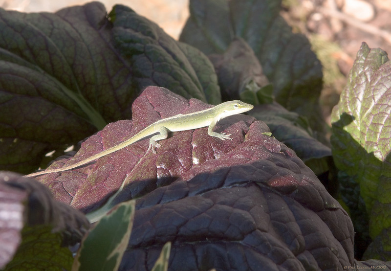 This handsome fellow thinks he has a cousin affiliated with Geico.