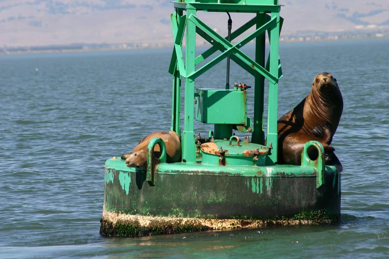 Boat_Ride_Labor_Day_2010029