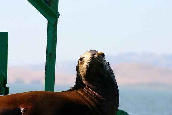 Boat Ride Labor Day 2010