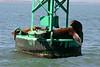 Boat_Ride_Labor_Day_2010006