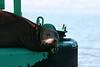 Boat_Ride_Labor_Day_2010019