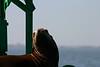 Boat_Ride_Labor_Day_2010021
