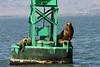 Boat_Ride_Labor_Day_2010028
