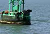 Boat_Ride_Labor_Day_2010009