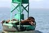 Boat_Ride_Labor_Day_2010007