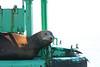 Boat_Ride_Labor_Day_2010014