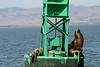 Boat_Ride_Labor_Day_2010030