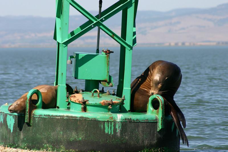 Boat_Ride_Labor_Day_2010026