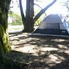 my tenr