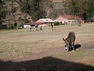 A schoolyard visitor.