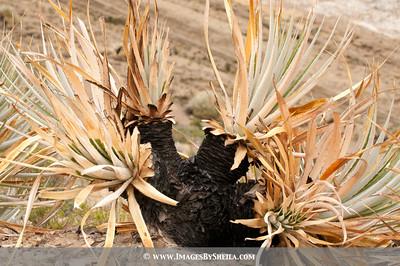ImagesBySheila_Bolivia_SRB2535