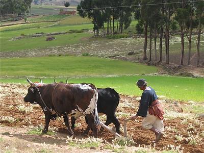 De boer ploegt voort. Tarabuco, Bolivia.
