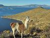 Lago Titicaca a 4.000 metros, es el lago navegable más alto de la tierra.