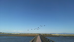 Bolsa Chica Wetlands Footbridge. Usually filled with photographers but today is very cold and windy.