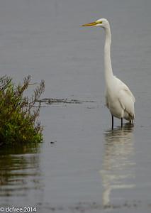 Nice Egret Pose