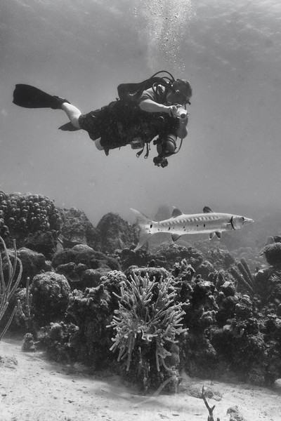Barracuda and Scuba Diver