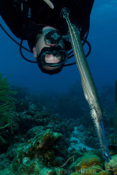 Trumpetfish and Scuba Diver
