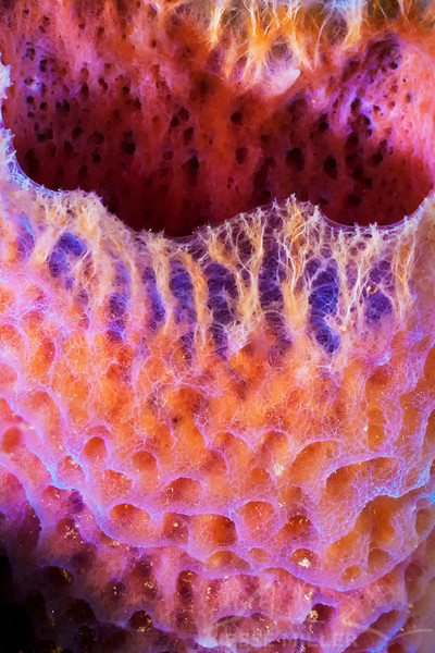 Branching Vase Sponge