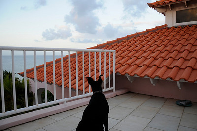 Bonaire January 2011