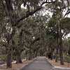 An avenue of live oaks