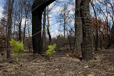 20080804_Fire_0017-2sharp