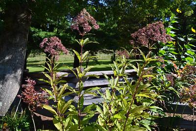Daniel Boone Gardens