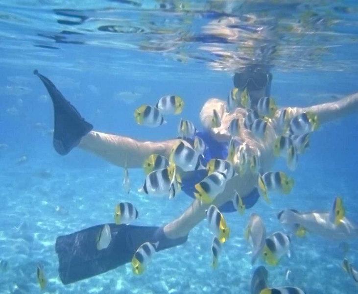 Allen feeding the tropical fish