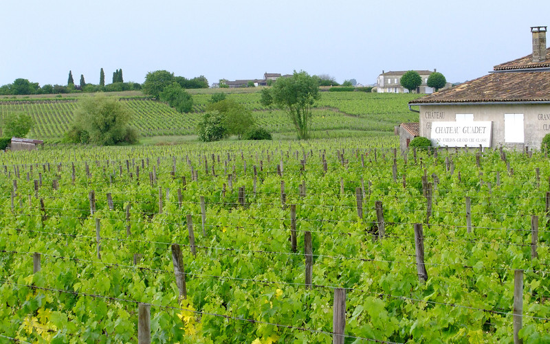 A typical vineyard scene in the Saint-Emilion area - part of the Bordeaux wine region.  The British had priority rights to wine from this region for almost 600 years - until the French Revolution.
