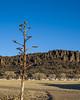 Fort Davis Yucca