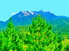 Mount Kinabalu; Pinus merkusii foreground