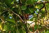 Sepilok. Rainforest Discovery Centre: Squirrel