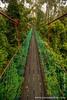 Danum Valley Conservation Area: Rainforest Canopy Walk