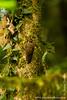 Danum Valley Conservation Area: Woodpecker
