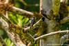 Danum Valley Conservation Area: Bird