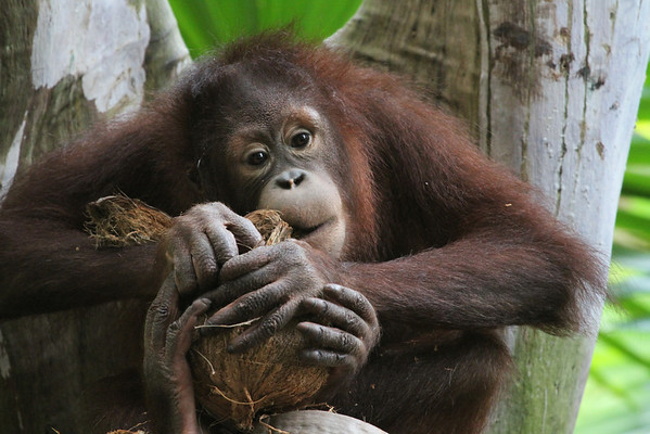 Borneo Malaysia - Stephen