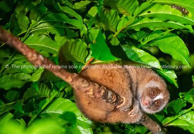 Borneo, Sabah