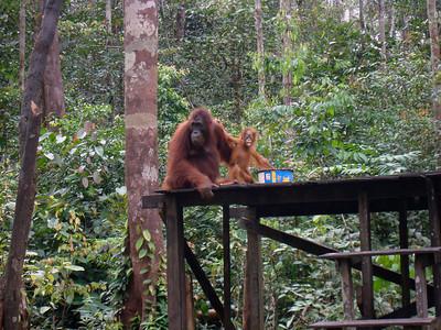 Borneo - Steve's