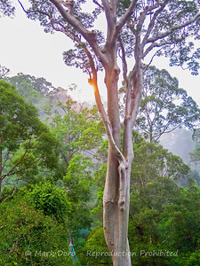 Sunrise through the trees, Danum Valley Conservation area, Sabah, Malaysian Borneo