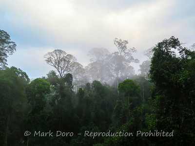 Danum Valley Conservation area, Sabah, Malaysian Borneo
