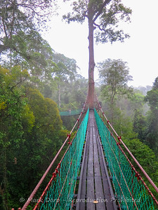 Elevated walkways through the forest, Danum Valley Conservation area, Sabah, Malaysian Borneo