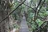 1794  Malaysia - Borneo, Bako National Park, Lintang trail