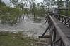 1817  Malaysia - Borneo, Bako National Park, Lintang trail