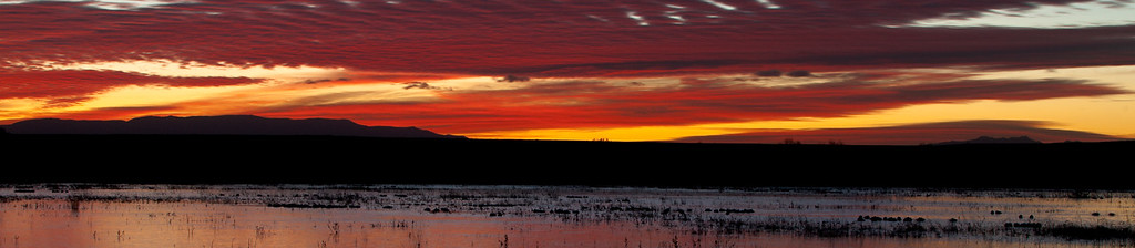 Bosque Del Apache Dec, 2009