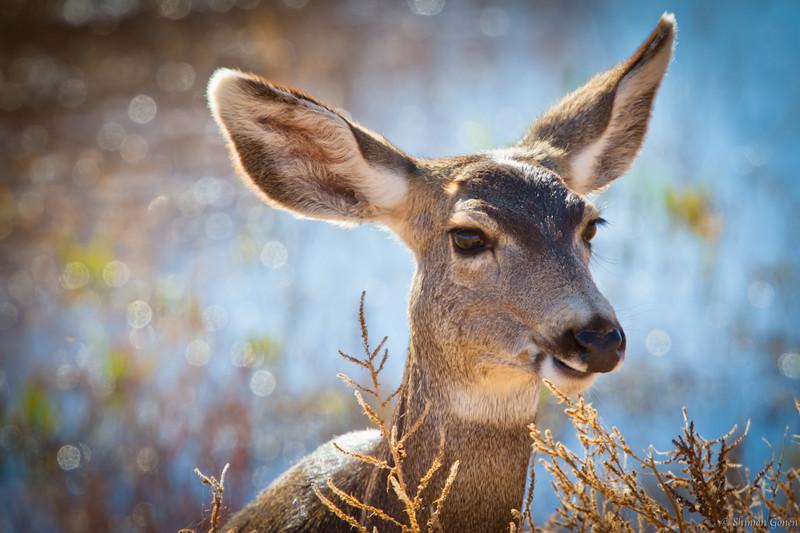 Deer in Bosque refuge - New Mexico