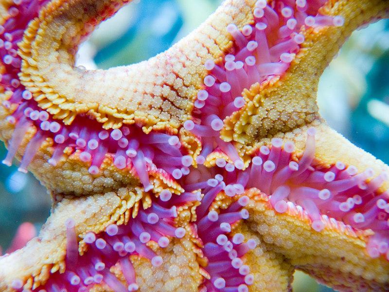 Starfish!!!  I love macro shots.